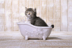Gatito adorable lindo en una bañera que se relaja imagenes de archivo