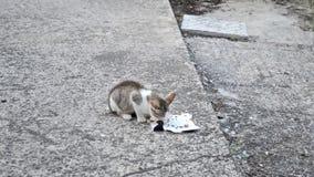 Gatito adorable que come la comida en la yarda - v?deo del animal dom?stico almacen de metraje de vídeo