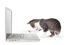 Gatito adorable usando el ordenador portátil Foto de archivo libre de regalías