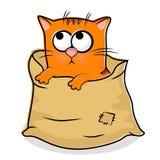 Gatito agradable en el bolso de lino Fotografía de archivo