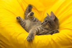 Gatito ahumado en una silla amarilla Fotografía de archivo libre de regalías