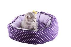 Gatito aislado Fotos de archivo