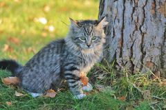 Gatito al lado del árbol Fotografía de archivo