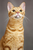 Gatito amarillo fotos de archivo