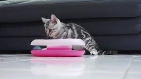 Gatito americano del shorthair del gato atigrado lindo del bebé que juega con una bola del carril almacen de metraje de vídeo