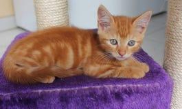 Gatito anaranjado Foto de archivo