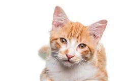 Gatito anaranjado Fotografía de archivo libre de regalías
