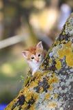 Gatito anaranjado del bebé Fotografía de archivo libre de regalías
