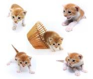 Gatito anaranjado del bebé Fotografía de archivo