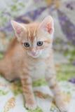 Gatito anaranjado del gato atigrado que se sienta en un edredón Imagen de archivo libre de regalías