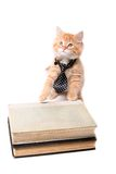 Gatito anaranjado estudioso Fotos de archivo