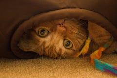 Gatito anaranjado juguetón en un túnel Imagen de archivo