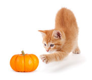Gatito anaranjado lindo que juega con una mini calabaza en blanco Imagenes de archivo