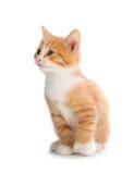Gatito anaranjado lindo que mira para arriba en un fondo blanco fotografía de archivo