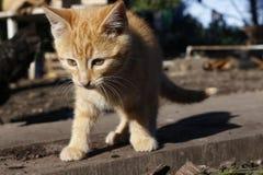 Gatito anaranjado que camina en la madera fuera de la casa Imagen de archivo