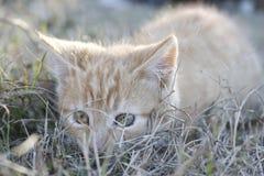 Gatito anaranjado que juega en el parque de la casa foto de archivo