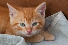 Gatito anaranjado y blanco Fotos de archivo libres de regalías