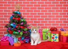 Gatito anaranjado y blanco del gato atigrado por el árbol de navidad Imagenes de archivo