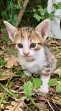 gatito asombroso fotos de archivo