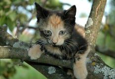 Gatito asustado en el árbol Fotos de archivo libres de regalías