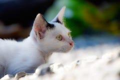 Gatito blanco imagenes de archivo