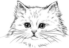 Gatito blanco Foto de archivo libre de regalías