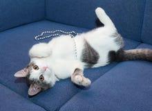 Gatito blanco adolescente con los juegos grises de los puntos Imagen de archivo
