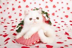 Gatito blanco con los corazones del amor Foto de archivo