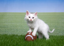 Gatito blanco en hierba con un fútbol miniatura fotos de archivo libres de regalías