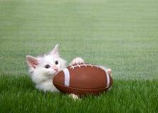 Gatito blanco en hierba con un fútbol miniatura imagen de archivo libre de regalías