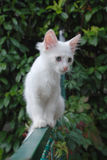 Gatito blanco en la puerta de jardín fotografía de archivo libre de regalías