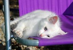 Gatito blanco en silla púrpura imagen de archivo libre de regalías