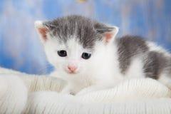 Gatito blanco en un primer cómodo combinado Fotografía de archivo