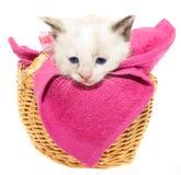 Gatito blanco en una cesta Fotografía de archivo libre de regalías