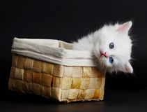 Gatito blanco en una cesta. Imagen de archivo