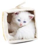 Gatito blanco en una cesta. Fotografía de archivo
