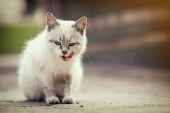 Gatito blanco lindo Imágenes de archivo libres de regalías