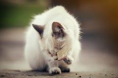 Gatito blanco lindo Fotografía de archivo