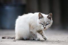 Gatito blanco lindo Fotos de archivo libres de regalías