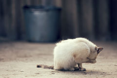 Gatito blanco lindo Fotos de archivo