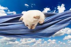 Gatito blanco lindo en la hamaca aislada en el cielo azul Fotografía de archivo libre de regalías