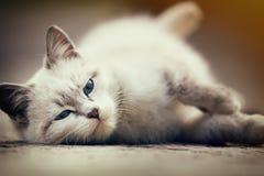 Gatito blanco lindo que miente en la tierra Foto de archivo