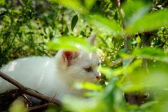 Gatito blanco que oculta debajo de los árboles imagenes de archivo