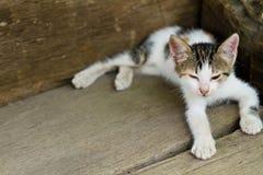 Gatito blanco que se sienta en el pórtico Imagenes de archivo