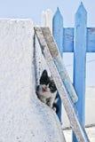 Gatito blanco y negro asustado foto de archivo