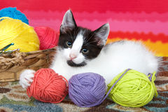 Gatito blanco y negro del gato atigrado con las bolas del hilado Fotos de archivo libres de regalías