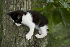 Gatito blanco y negro en árbol Imagen de archivo