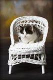 Gatito blanco y negro en silla de mimbre Foto de archivo