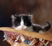 Gatito blanco y negro en sombrero decorativo Imagenes de archivo