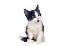 gatito blanco y negro, gato Foto de archivo